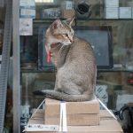 hong kong la ciudad que adora los gatos