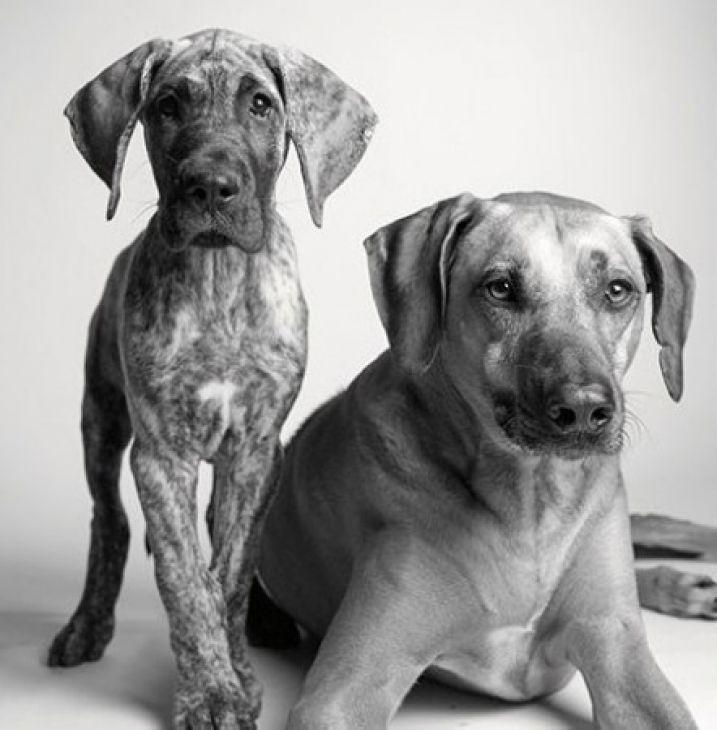 como envejecen los perros