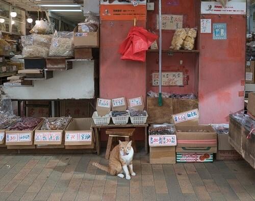 las mejores fotografías de la ciudad que adora a los gatos