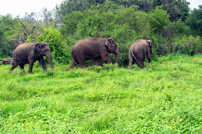 sai santuario india elefantes