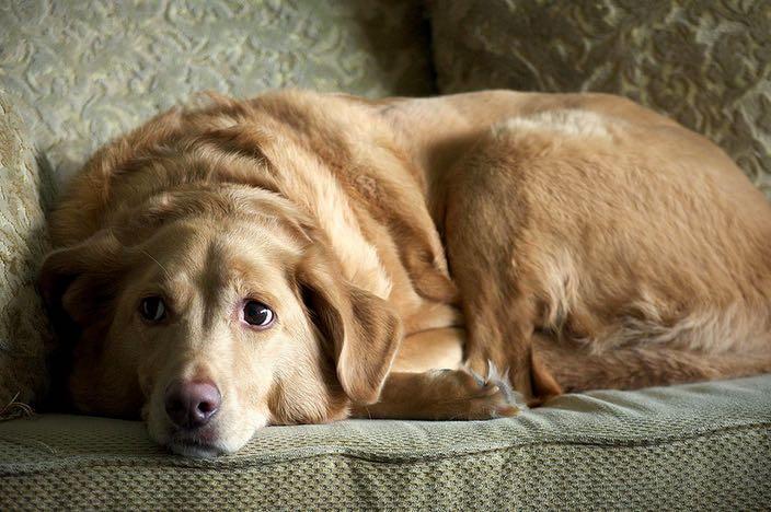 suplementos naturales para perros