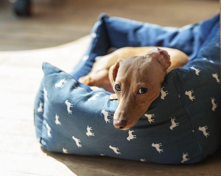 tratar la insuficiencia cardíaca en perros