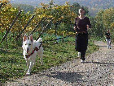 10 Consejos para practicar canicross con tu perro