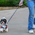 5 Errores que cometemos al pasear a nuestro perro