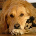 Alimentación y cuidados de un perro desnutrido