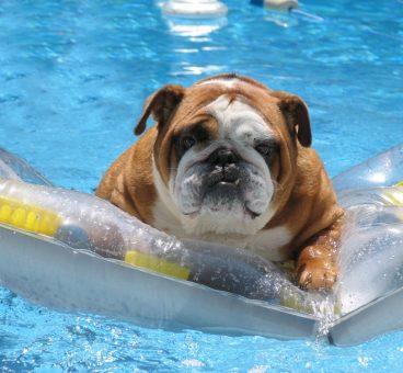 Cáceres abre un hotel para perros con parque acuático