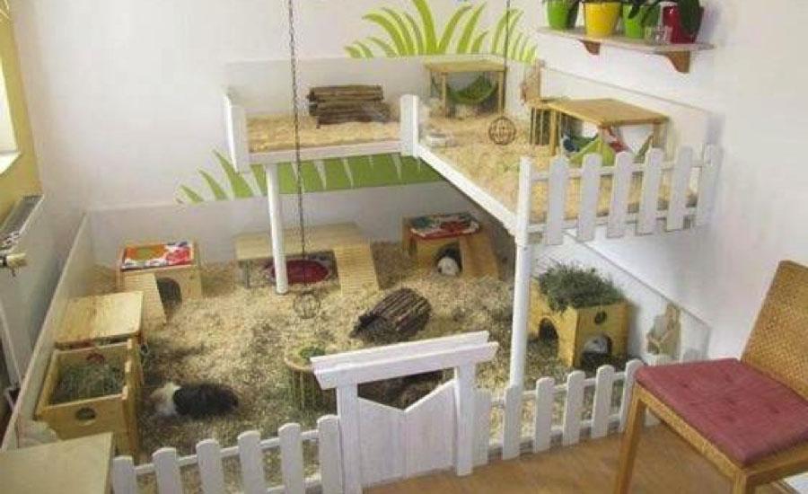 C mo hacer una casa para cobayas te contamos el paso a paso - Juguetes caseros para conejos ...