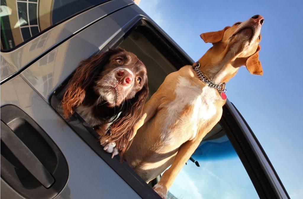 Cómo puedo acostumbrar al perro al coche