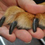 Cada cuánto tiempo debo cortarle las uñas a mi perro