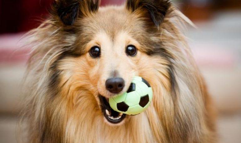 Causas de la alopecia canina