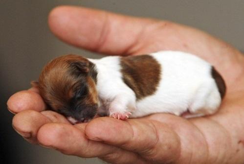 Causas de la anemia canina