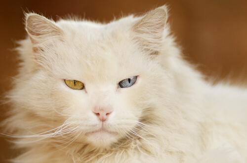 Causas de la hipotermia en gatos
