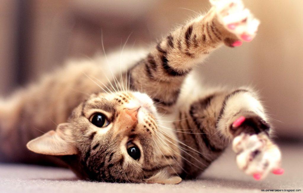 Causas del resfriado en los gatos