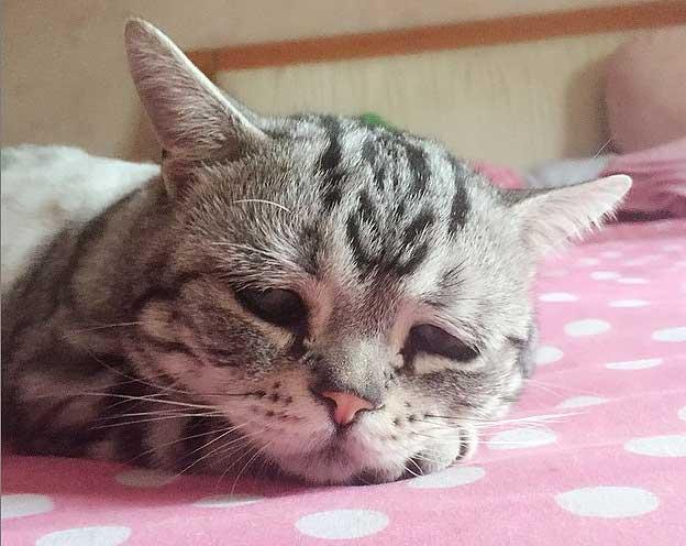 Causas por las que mi gato está triste