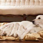 Consejos para el parto de una perra primeriza