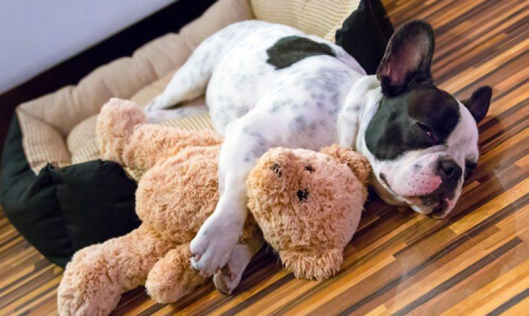 Consejos para evitar el sedentarismo en perros