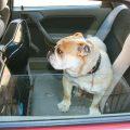 Consejos para evitar que el perro se maree en el coche