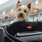 Consejos para viajar con perro de forma segura