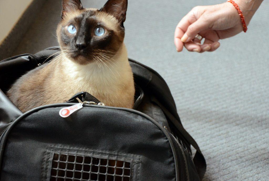 Consejos para viajar en coche con un gato