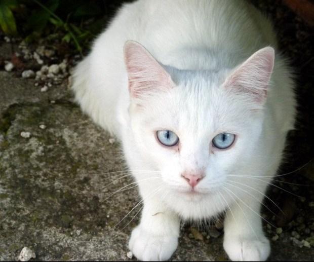 Cuidados extra para optimizar la salud de un gato anciano