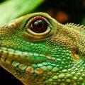 Descubre dónde viven las iguanas