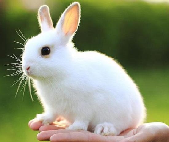Enfermedades de los conejos más frecuentes