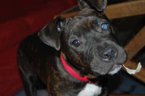 Facilitar la vida a un perro ciego