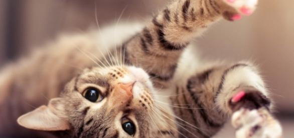 Factores de riesgo de la insuficiencia renal en gatos