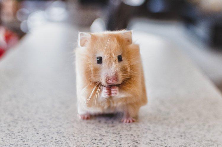 Fotografías de animales que parecen sacados de Minecraft