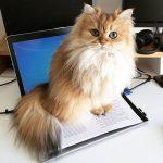 Gatos y perros que tienen más seguidores en Instagram que tu