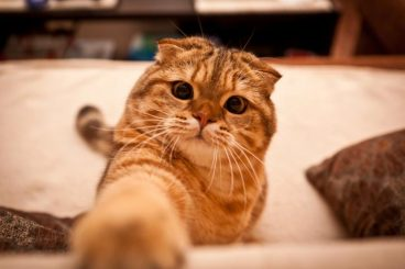 Hipotiroidismo en gatos