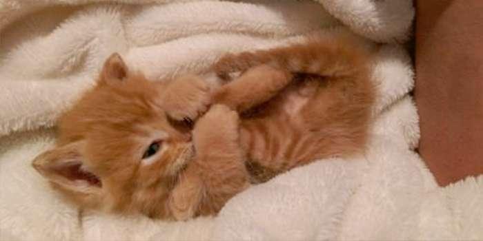 La gastroenteritis en gatos