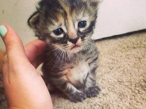 Mi gato está triste