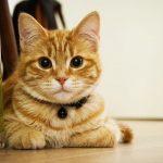Mi gato no puede orinar