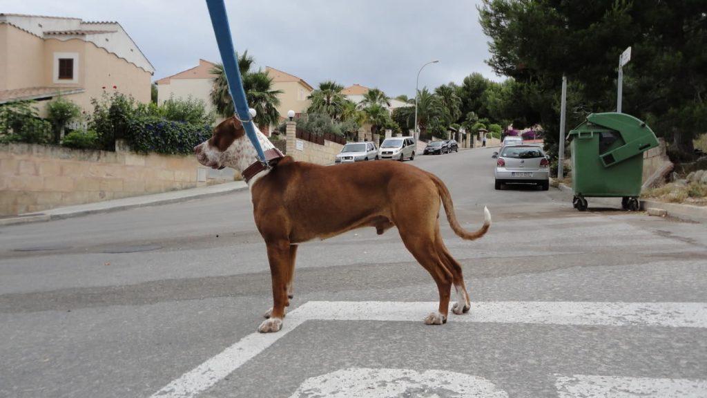 Otros cuidados para un perro desnutrido