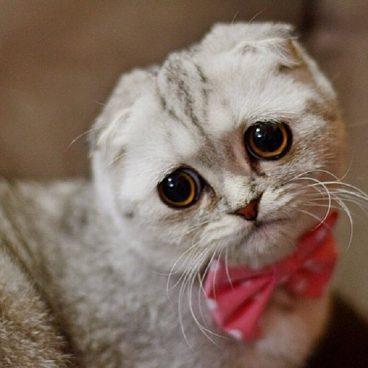 Pérdida de pelo en gatos
