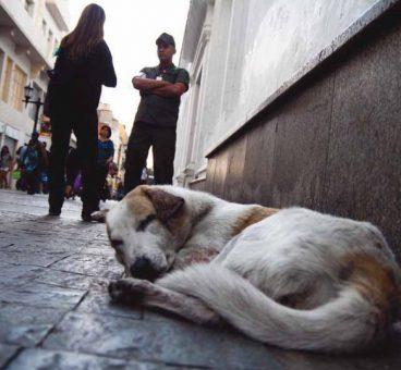 Perros y gatos abandonados en España sin parar
