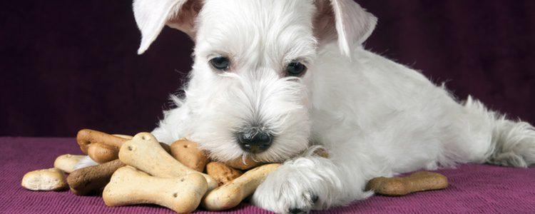 Por qué nos preguntamos si pueden comer pan los perros