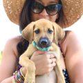 Potcake Place el paraíso-refugio de perros rescatados