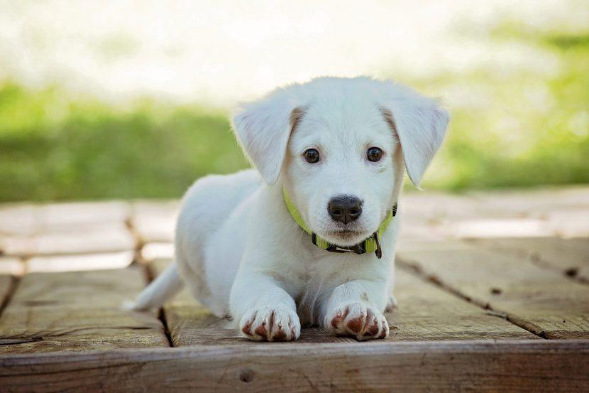 Prevención de la sarna en perros