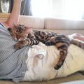 Problemas de tiroides en gatos