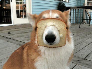Pueden comer pan los perros