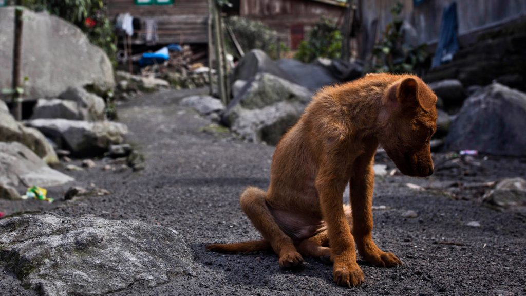 Qué debemos hacer si somos testigos de Maltrato Animal