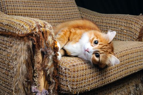 Qué es la insuficiencia cardíaca en gatos