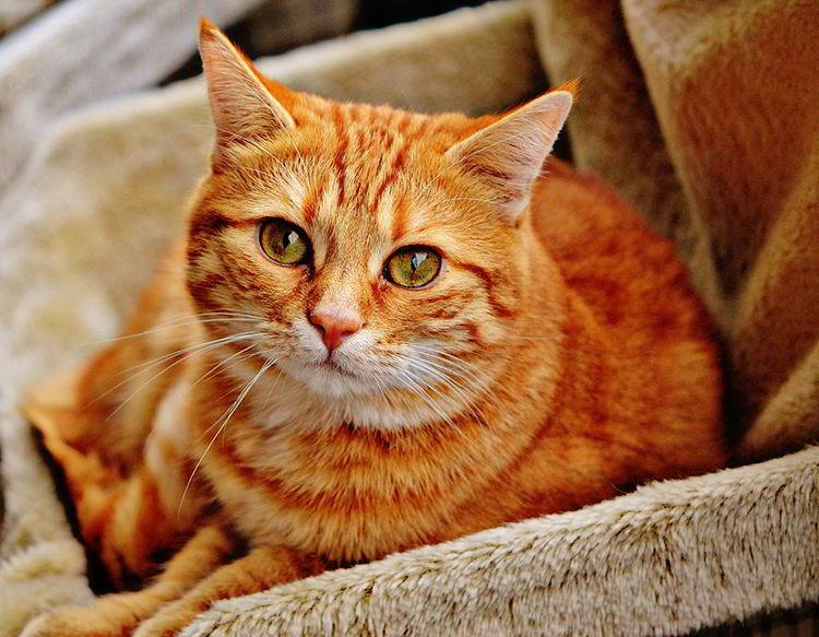 Qué es virus de la leucemia felina