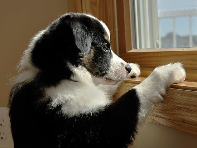 Qué hacer ante los ataques de pánico en perros