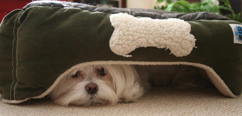 Qué hacer para que tu perro pierda sus miedos