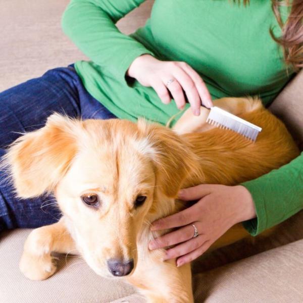 Qué perros corren mayor riesgo de sufrir alopecia canina