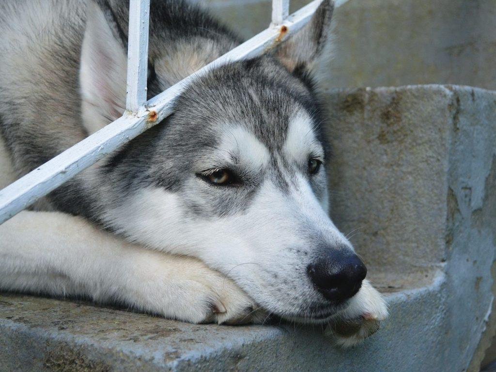 Qué siente tu perro cuando te vas de casa
