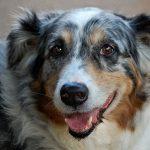 Qué son los perros mestizos o chuchos